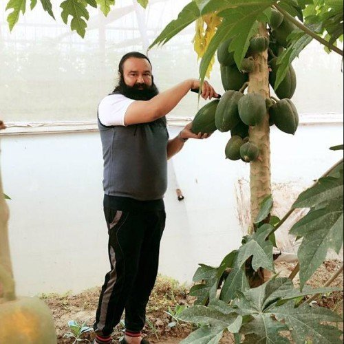 Dera chief earns Rs 20 daily growing vegetables in jail