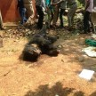 Bear Death in Tiger Reserve Area