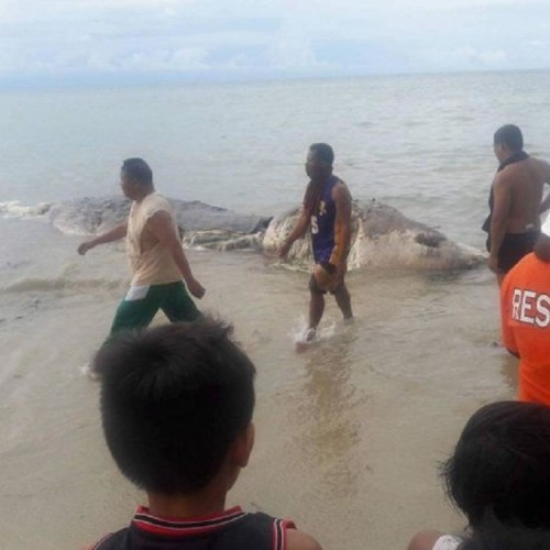 Mysterious sea creature found dead on beach in Philippines
