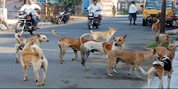Be careful with dogs, rabies means death, such caution