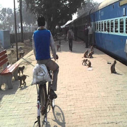 as to save their friend monkey jammed Delhi Howrah railway track