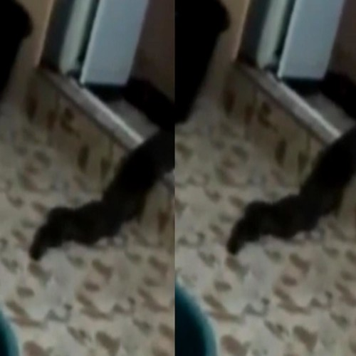 snake like creature found in couples home in Malaysia