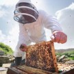 Beekeepers can go any state without nay checking