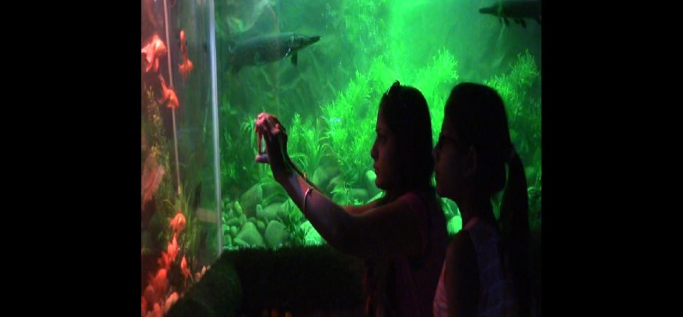 india-s first virtual aquarium started in udaipur rajasthan