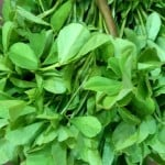 Fenugreek greens