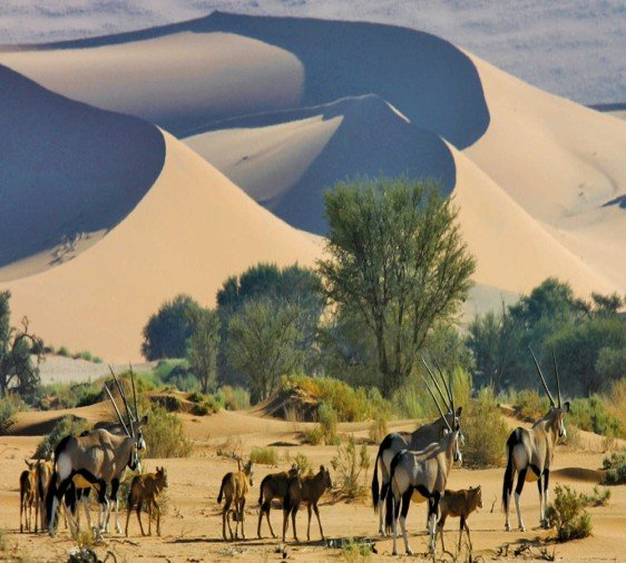 Namibia trip with Namib tribal people