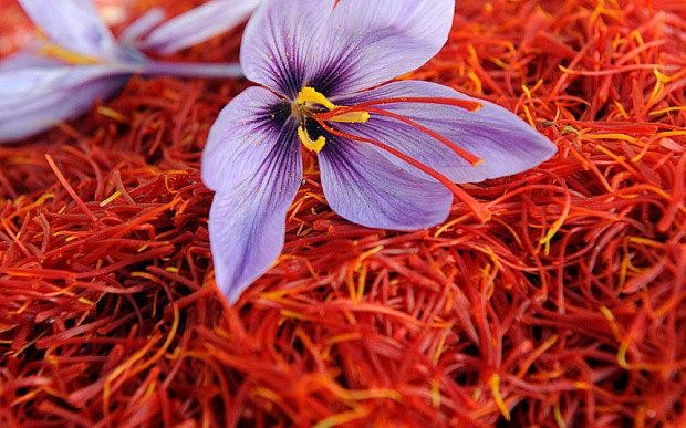 Research will be done with Germany on Kashmiri saffron