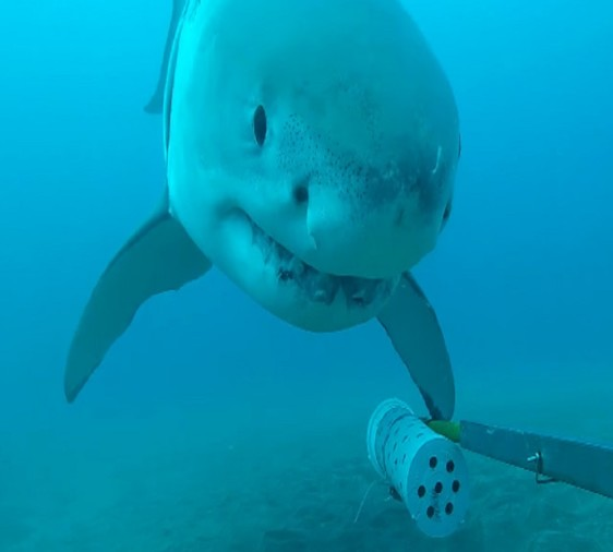 shark plays video viral in pacific ocean