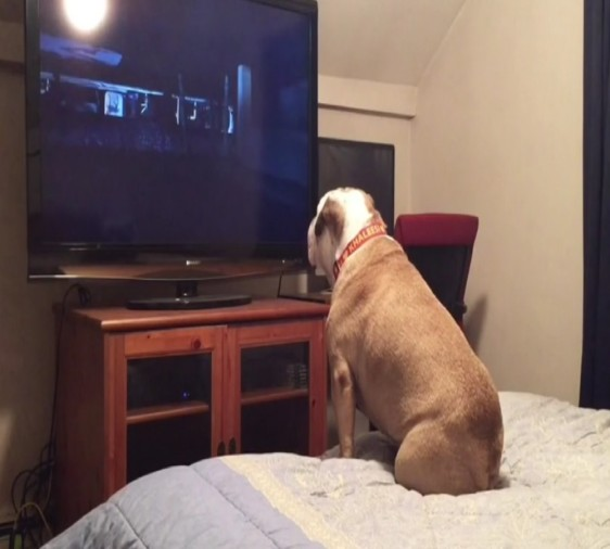 dog watch horror movies