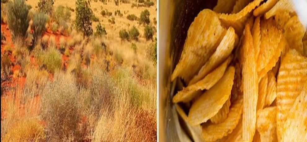 chips taste grass found in australia
