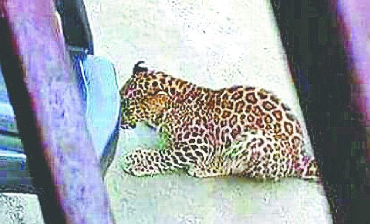 Rudraprayag: Guldar killed woman second incident in three days