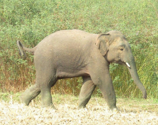 Elephant killed the boy in doiwala uttarakhand