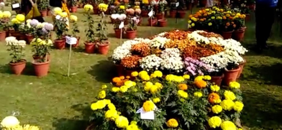 Flower exhibition organized at mall road in meerut