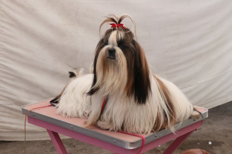 ऑनलाइन भी बेचे-खरीदे जा रहे डॉगी और पपी, करोड़ों का है कारोबार, मिलती है मुंहमांगी कीमत