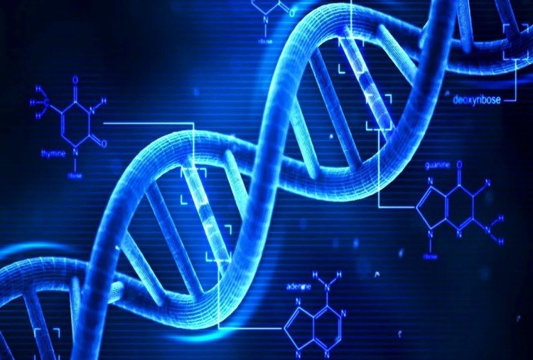 know each and everything about DNA