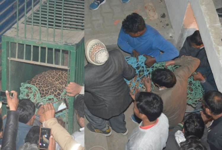 Leopard entered in sent Francis school lucknow