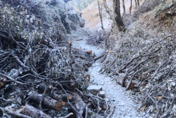 action on forest officers in shimla illicit felling case