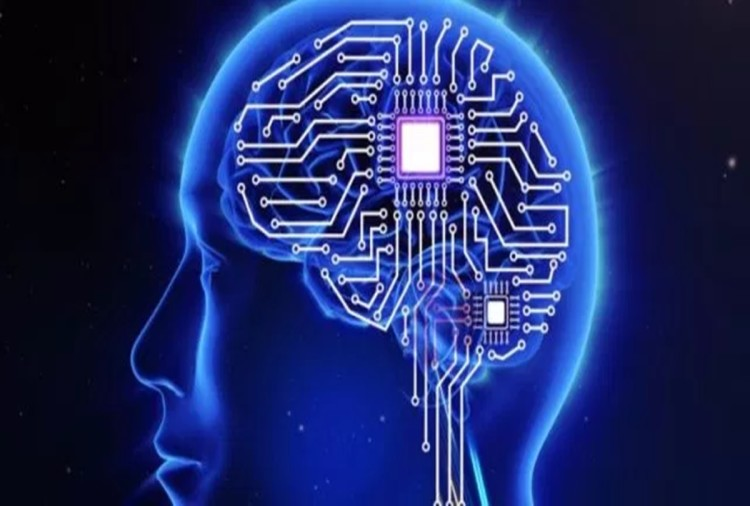 Know About The Part Of The Brain, Which Is Known As Cpu - जानिए