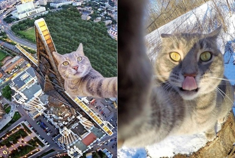 See this selfie cat who loves camera a lot