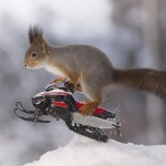 The winter olympic sports games for squirrels