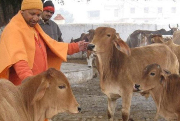 cow to play big role in bjp's plan for election 2019.