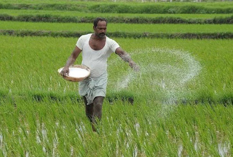 Urea shortage hits farming in Himachal Pradesh