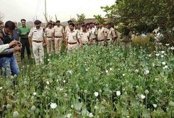 Illegal poppy hindi news illegal poppy news in hindi amarujala varanasi mightylinksfo