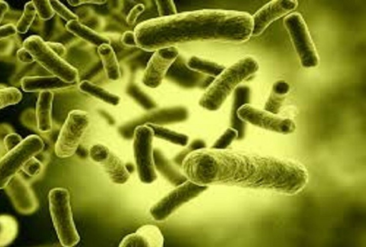 'Good bacteria of the body help to protect against cancer'