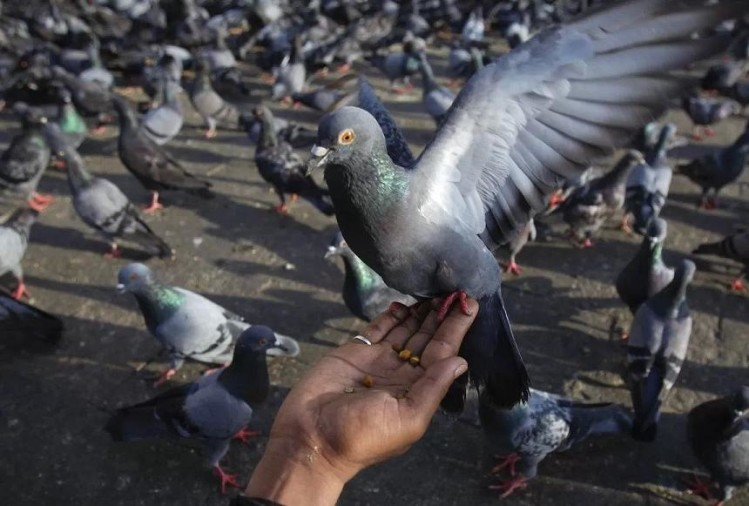 know why chhattisgarh police searching pigeons