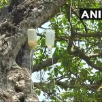 Dying 700 Year Old Banyan Tree in Telangana put On Drip