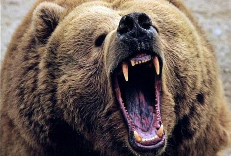चमोली जिले के घाट विकास खंड के ग्राम लाखी के दिनेश पर आज सुबह जंगली भालू ने हमला कर दिया।