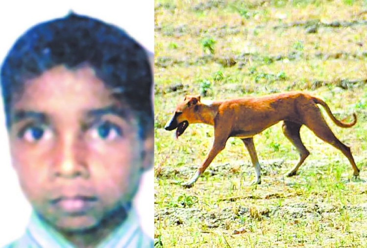 dogs killed another child in sitapur