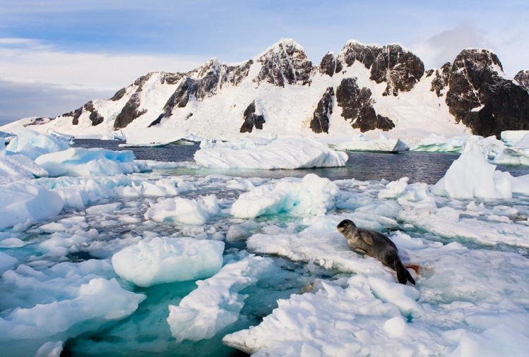 now Antarctica seals will predict about the melt sea ice