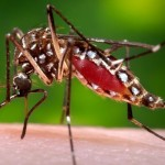 Effective home remedies to get rid of dengue malaria mosquitoes Naturally