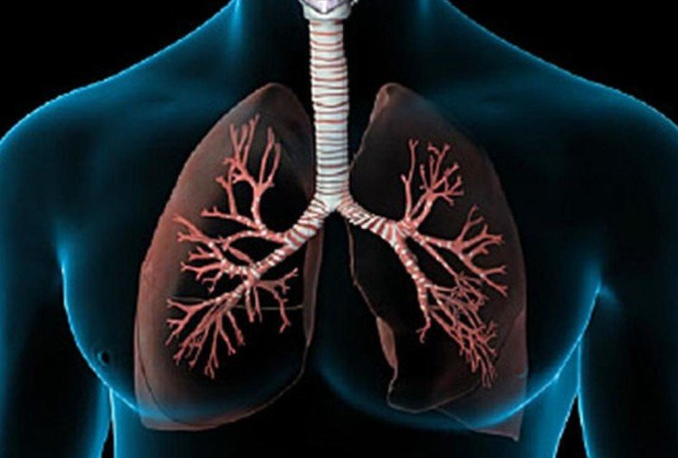 What Happens To Peoples Lungs When They Get Coronavirus - कोरोना वायरस से  लोगों के फेफड़ों पर क्या असर पड़ता है? - Amar Ujala Hindi News Live