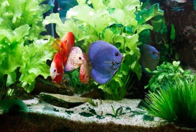 feng shui tips for fish aquarium at home