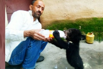 Family rescue Bear baby from forest fire in Chamba Himachal Pradesh