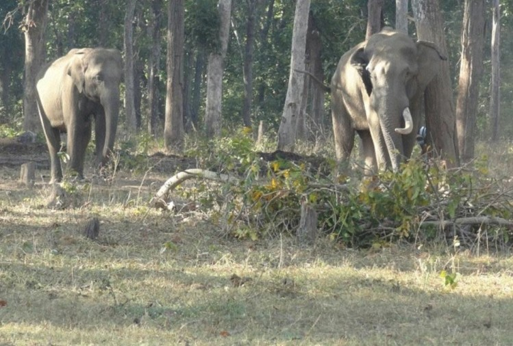 Chhattisgarh: minister performed worship to propitiate elephants