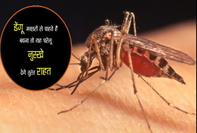 Avoid Getting Bitten by Dengue malaria Mosquitoes