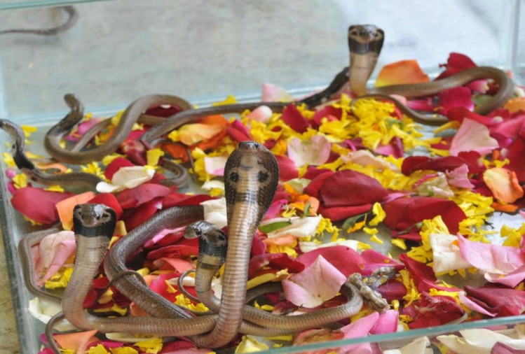 nag panchami 2018 nag panchami festival importance and history of snakes in indian mythology