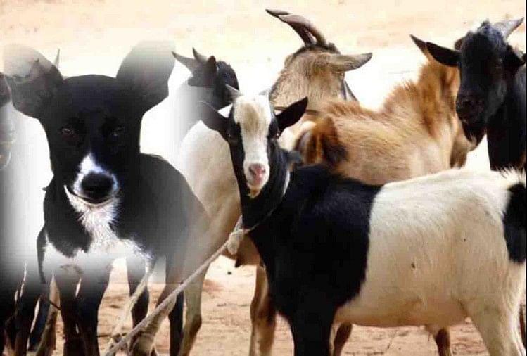 Man Was Given Dog Inspite Of Goat For Sacrifice On Bakra Eid