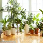 vastu tips keep these plants in your home get money and prosperity