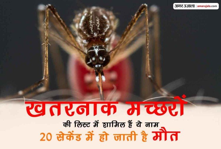 most dangerous mosquitoes carry devastating diseases like malaria dengue chikungunya