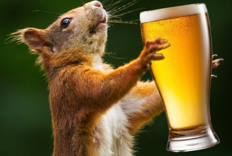 Rats drink seized alcohol in Bihar.