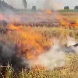 पराली जलाने पर यूपी, पंजाब, हरियाणा और दिल्ली के मुख्य सचिव तलब, प्रदूषण पर एनजीटी सख्त