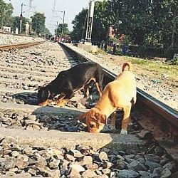 संवेदनहीनताः हादसे के 45 घंटे बाद भी नहीं हुई ट्रैक की सफाई, मांस के टुकड़े खा रहे कुत्ते