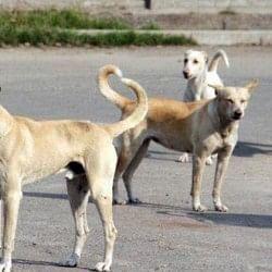बिहार: अस्पताल के ऑपरेशन थियेटर में घुसा आवारा कुत्ता, मरीज का कटा हुआ पैर लेकर भागा