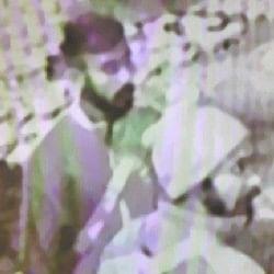 पंजाबः कार छीनकर भागे आतंकी आखिर कहां गायब हो गए, क्या है उनका मकसद, पढ़ें ये रिपोर्ट