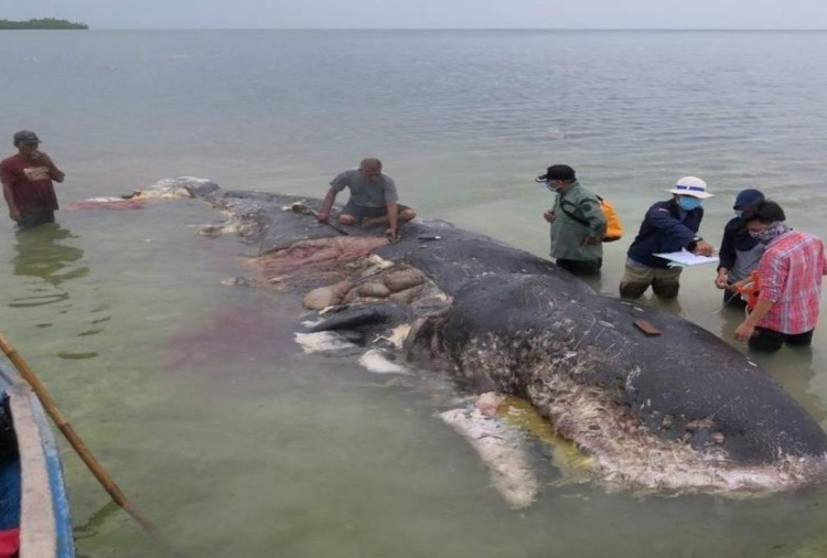 Whale found in Indonesia