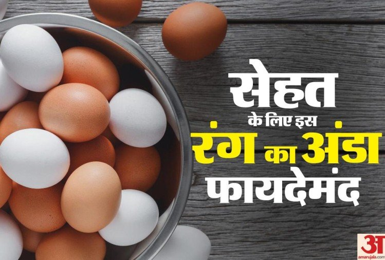 Know brown or white which colour egg is better for your health